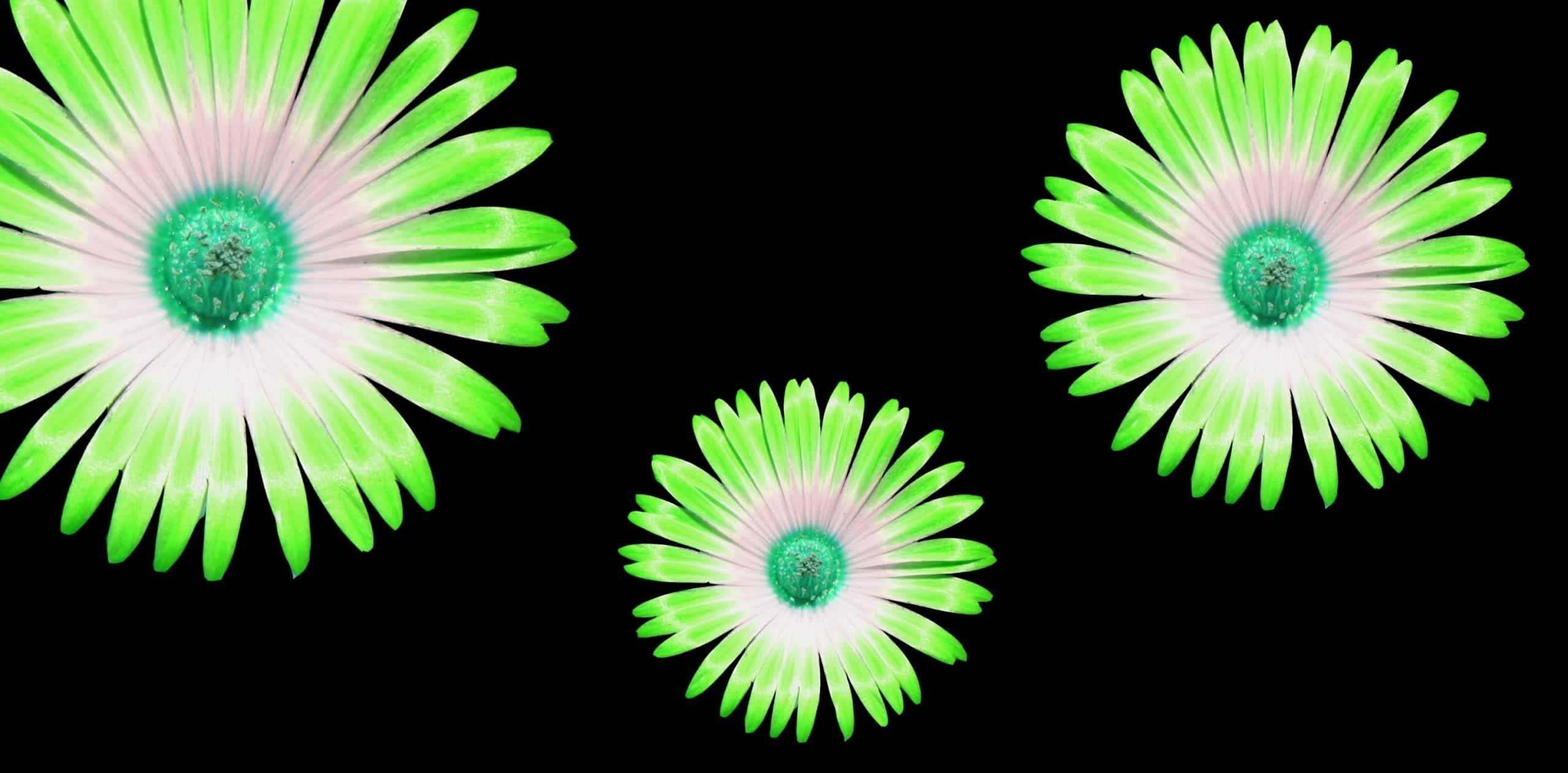 green flower final